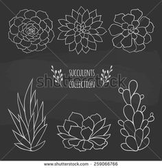 Succulent Stock Photos, Images, & Pictures | Shutterstock