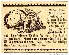 Original-Werbung/ Anzeige 1907 - LEHMANN'SCHE KANINCHEN-ZUCHT-ANSTALT / WILDPARK - POTSDAM - Ca. 45 X 35 Mm - Werbung