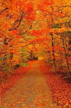Autumn Road Fall Pictures, Fall Photos, Nature Pictures, Beautiful World, Beautiful Places, Autumn Scenes, Autumn Aesthetic, Autumn Art, Autumn Leaves