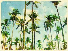 Coconut Trees | Flickr