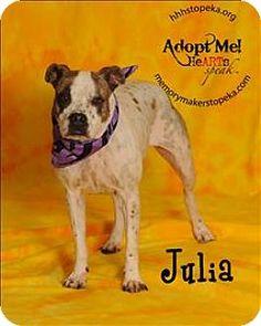 Topeka, KS - Pit Bull Terrier Mix. Meet Julia, a dog for adoption. http://www.adoptapet.com/pet/13971630-topeka-kansas-pit-bull-terrier-mix