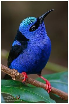 Ideas blue bird photography sweets for 2019 Cute Birds, Pretty Birds, Small Birds, Colorful Birds, Little Birds, Beautiful Birds, Animals Beautiful, Nature Animals, Animals And Pets