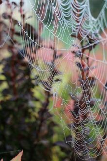 Cobwebs in early morning mist Early Morning, Mists, Vineyard, Garden, Outdoor, Outdoors, Garten, Vine Yard, Lawn And Garden
