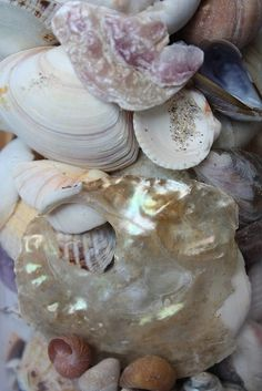 """""""One cannot collect all the beautiful shells on the beach."""" Anne Morrow Lindbergh"""