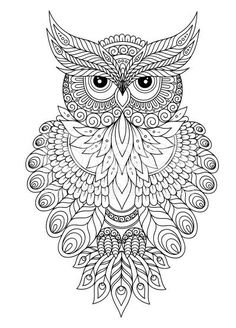 Coloring Book For Adult And Older Children Page With Cute Owl Floral Frame Outline Drawing In Zentangle Style