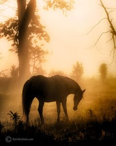 Horse, fog at Dawn