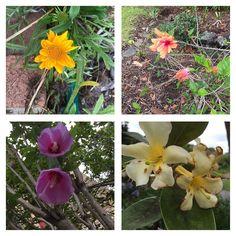 #flowers #flowerstagram #flowersofinstagram #spring #sydney #instagood #instalove #gardenlife