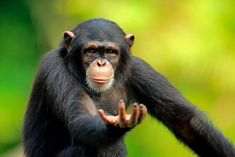 Funny Photos, Funny Images, King Kong, Cute Little Animals, Animal Photography, Animal Kingdom, Animals Beautiful, Funny Animals, Wildlife
