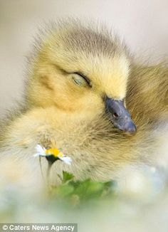 Snoozing amongst the daisies,