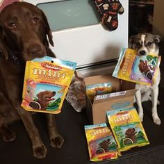 These two who really know how to work together to get treats. | 29 Friendships Between Big And Little Dogs
