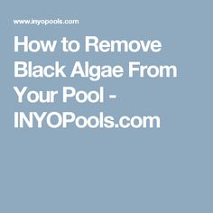 How to Remove Black Algae From Your Pool - INYOPools.com