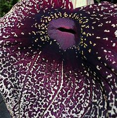 """151 Me gusta, 4 comentarios - Diseño Botánico (@jungle_________) en Instagram: """"🌷🙏🏻 Permite que la belleza de una sola flor, ilumine todo tu jardín y no olvides agradecer. Al…"""" Leaves, Instagram, Flower, Beauty"""