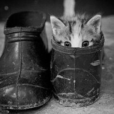 Waterproof Kitty