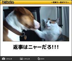 返事はニャーだろ!!! Cute Baby Animals, Animals And Pets, Funny Animals, Black Jokes, Funny Cute, Hilarious, Japanese Funny, Kawaii Cat, Funny Laugh