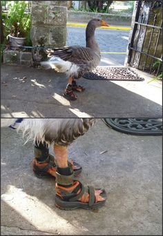 gothdrool: he boot just right for he gotdam feet :)