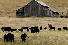 Black Angus Art Left Click On Pictures To Enlarge And Or