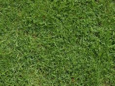Game App, Grass, Herbs, Grasses, Herb, Medicinal Plants