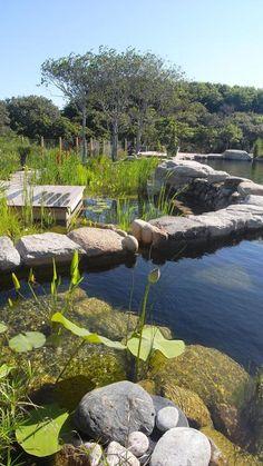 a residential BioNova swimming pond in Nantucket, Mass.