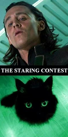WHY am I laughing so hard at this? lol!!<------- Loki or the cat? Loki wins, of course!!!u^u