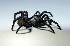 South Florida, Everglades National Park, Florida Everglades, Spider Species, Large Spiders, Veterinary Services, Trap Door, Creeped Out, National Parks