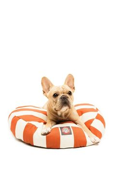 Frenchie, orange, stripes. Three of my favorite things. One day!