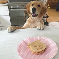 Today I am 5 months old and there's no better way to celebrate than a peanut butter & bacon 'cake'   Gracie ❤
