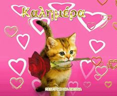 Neko, Valentines Day Cat, All About Cats, Domestic Cat, Animals Images, I Feel Good, Cats And Kittens, The Dreamers, Good Morning