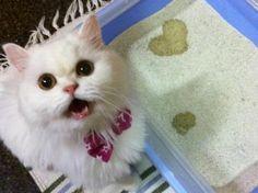"""Herzlicher Gruß im Katzenklo: """"Schau mal, nur für dich!"""" — Bild: 10minutesaperdre.fr / Fabo    www.einfachtierisch.de"""