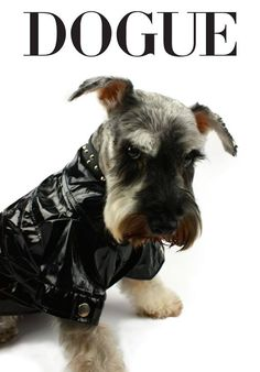 Everything we all respect about the Fun Miniature Schnauzer Pup Schnauzers, Standard Schnauzer, Miniature Schnauzer Puppies, Schnauzer Puppy, Baby Dogs, Dogs And Puppies, Doggies, Most Popular Dog Breeds, Dog Accessories