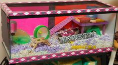 Patch's Pad & Hamster Picture of the Day Patch's Pad & Hamster Bild des Tages Hamster Tank, Robo Hamster, Hamster Life, Hamster Habitat, Hamster House, Gerbil, Hamster Stuff, Hampster Cage, Dwarf Hamster Cages