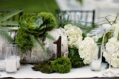 Inspiration for a horizontal birch log with clusters of fresh green moss and varied types of succulents and air plants.