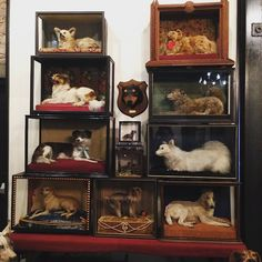 TODAY: Visit the Morbid Anatomy Museum as part of Gowanus Open Studios and save one dollar on admission AND meet J. D. Powe, the very knowledgeable curator our current taxidermy exhibition featuring Walter Potter's circa 1890 Kitten Wedding! He will be on hand from 12-6 to answer all your questions and tell you the amazing stories behind the pieces. 424 Third Ave at 7th street, Brooklyn.  Image: The Ministry of Curiosity