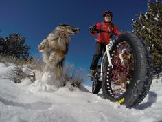 Do Dogs Smile?   Singletracks Mountain Bike News
