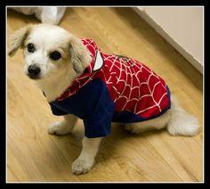 Spider-Dog!
