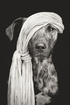 Photo Pirate of the Baltic Sea by Elke Vogelsang on 500px