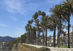 Santa Monica's version of the tree lined street is a palm tree lined coastline!
