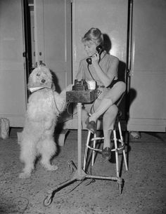 0 Doris Day on the phone next to a  sheepdog 1960