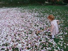 This is my niece! Photo cred @Rachel Kiehl A 16-month old's futile attempt to sweep up the magnolia petals