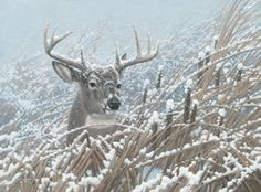 Cattail Whitetail - Deer Print by Michael Sieve  |  Wild Wings