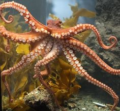 Why Octopus Arms Don't Get Tangled