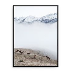 Mountain Horses Print - Art Work - HOMEWARES