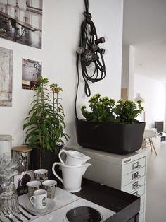 Mix & Match jouw perfecte stijl in huis met jouw favoriete Kalanchoë. Onze tip: gebruik verschillende hoogtes en de veelzijdige bloemen van Kalanchoë door elkaar voor een speels effect. Kies voor verschillende kleuren voor levendigheid. Wil je meer monotoon? Gebruik dan één zachte kleur, zoals wit of lichtroze. Meer inspiratie vind je op Kalanchoe.nl/inspiratie
