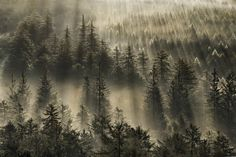 """The forest for the trees"" by Alex37.deviantart.com on @deviantART  #forest #light #trees #magic #place #nature"