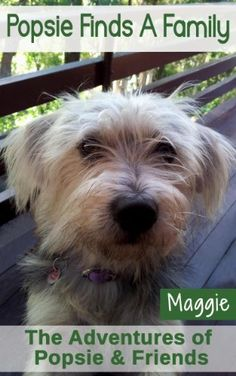Popsie Finds A Family: Dog Stories for Kids and Bedtime Stories for Kids (The Adventures of Popsie & Friends Book 1) by Maggie David, http://www.amazon.com/dp/B00D5LNUHQ/ref=cm_sw_r_pi_dp_Ky5eub1H2MWR1