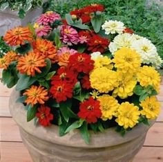Zinnia Seeds - 118 Zinnias - Huge Selection of Annual Flower Seeds Flower Seeds, Flower Pots, Zinnia Elegans, Perennial Vegetables, Tall Plants, Potted Plants, Annual Flowers, Annual Plants, Garden Seeds