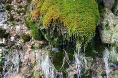2012-09-18: dripping moss