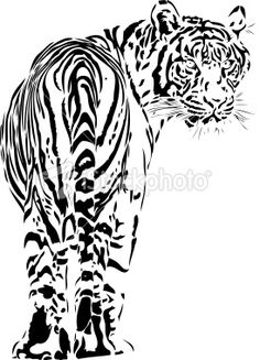 Tiger illustration B Royalty Free Stock Vector Art Illustration