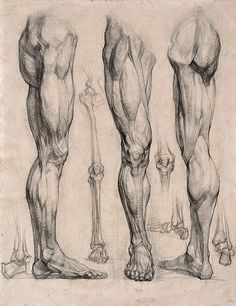 Muscle anatomy - smooth out the lines and elongate the form and you literally have the perfect supermodel leg! Any type of humanoid leg you wish to draw is contained within this image.