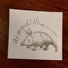 #armadillo drawing for daily drawing #prompt #draweachday #drawingprompt #kidlitart #animal