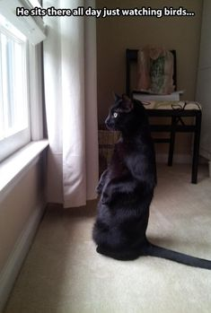 Just watching birds...